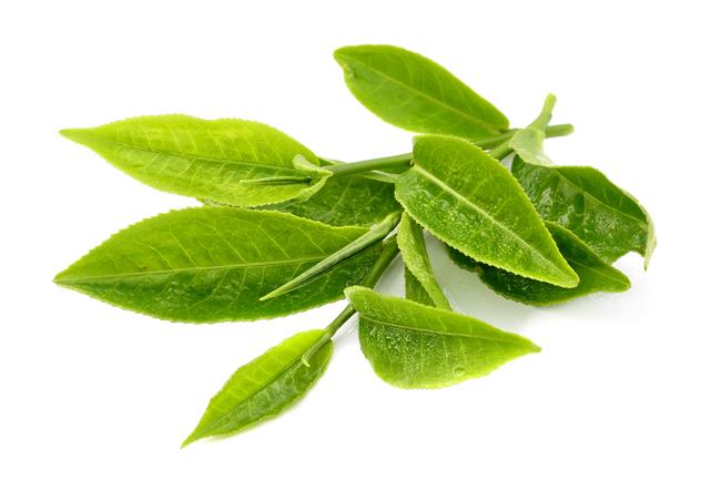 Nhai trà xanh